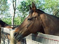 Sassy was head of the mares in their corral